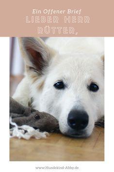#Hund #Hundeblogger #Hundeliebe #Wissen #offenerBrief #mussmalgesagtwerden #Rütter #Hundetraining