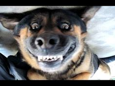 Funny Dogs Barking - A Funny Dog Barking Videos Compilation 2015 - YouTube