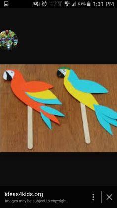 Rainforest parrots