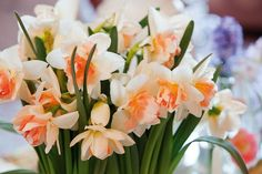 Daffodils classification, Daffodils types, Daffodils Groups, Narcissus classification, Narcissus types, Narcissus Groups, Narcissus Divisions, Daffodils Divisions, Daffodil varieties, Daffodil Types