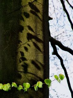 Frühling am Stechlinsee