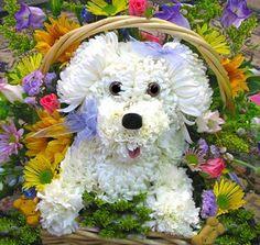 This florist creates adorable animal flower arrangements. Unique Flowers, Small Flowers, Diy Flowers, Beautiful Flowers, Ikebana, Deco Floral, Arte Floral, Puppy Flowers, Fleur Design