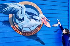 Mandurah 3D Art Trail Shark Jaws, World Festival, Bottlenose Dolphin, Public Art, Western Australia, Perth, Three Dimensional, Dolphins, Westerns