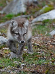 A brother from the wild side, but too cute to ignore