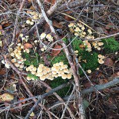 Pilze Hotzenwald bei Karsau