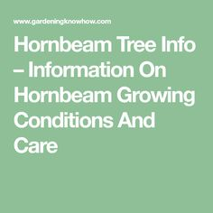 Hornbeam Tree Info – Information On Hornbeam Growing Conditions And Care