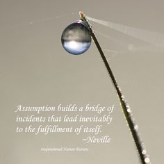 """""""Assumption builds a bridge of incidents that lead inevitably to the fulfilment of itself."""" - Neville"""