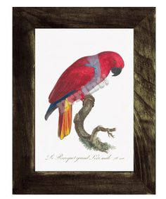 Red Parrot II Exotic Bird print White paper Wild life by PRRINT, $8.99