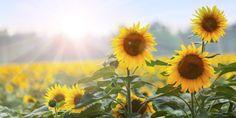 Plantas para la buena fortuna y protección