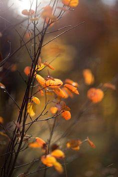 Falling leafs.