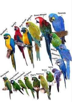 The Macaws -- I also like Catalina  Macam which are a hybrid.