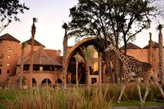 Disney's Animal Kingdom - And, when you visit the best place to stay is at Kidani Village.  Sanaa Restaurant at Kidani is also a must!