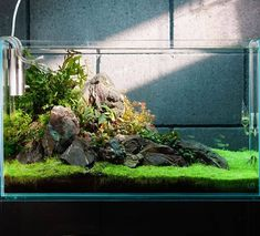 Repost from using - The aftermath of an in tank rescape. Gotta straighten the ug line, tighten up the Bucephalandra, and clean up the loose grit over the next few days. Fish Aquarium Decorations, Aquarium Setup, Aquarium Design, Freshwater Aquarium Plants, Aquarium Fish Tank, Planted Aquarium, Aquarium Aquascape, Aquarium Landscape, Nature Aquarium