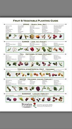 Vegetable garden planting guide.