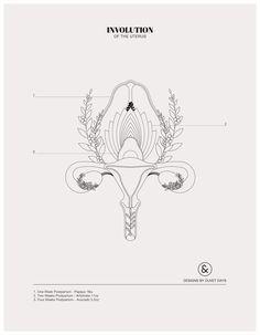 Evolution of the Uterus - Colouring Sheet - Designs by Duvet Days Anatomy Illustrations Pelvis Anatomy, Lung Anatomy, Heart Anatomy, Anatomy Art, Brain Anatomy, Fetus In Womb, Coloring Sheets, Coloring Books, Evolution