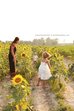late june sessions in our sunflower field...