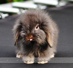 Rabbit by Pebels.deviantart.com on @deviantART