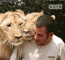 """funny-gif-lions-owner-kisses (=^.^=) Thanks, Pinterest Pinners, for stopping by, viewing, re-pinning, & following my boards.  Have a beautiful day! ❁❁❁ and """"Feel free to share on Pinterest""""✮✮"""" #catsandme #cats"""