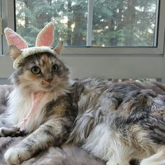 Brighton is such a great lil cat hat model... and the cutest Easter kitty-bunny ever!! Honestly she has pretty fickle moods (as all cat slaves know well lol) Heaven forbid I try when she's in a feisty mood...I just pass the catnip and back away