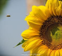 """""""Bee""""-line to the Pollen by McPhedran Phocus"""