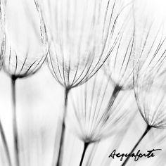 Natura Dandelion Collection By Acquaforte - www.acqua-forte.com