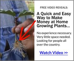 Quick and Easy Way to Make Money at Home Growing Plants