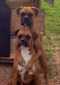 Beauty of friendship #Boxer