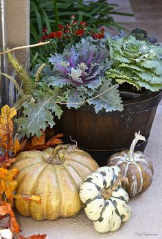 Easy Fall Outdoor Decor with a mix of Mums, Flowering Kale & Cabbage - our new favorite fall plants! Add a few pumpkins for the complete look.