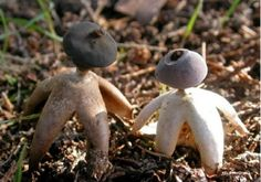 LOLWUT? Apparently Human-Shaped Mushrooms Exist