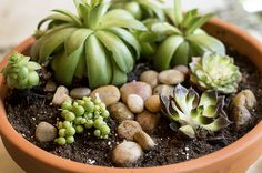 Growing succulents is an easy and fun hobby that just requires succulent soil and a little knowledge about how to take care of plants in pots.