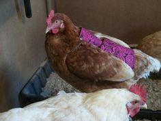 free-chicken-apron-saddle-pattern
