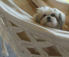 Teddy chillin in the hammock