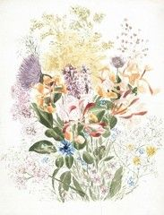 Beatrix Potter's Posy of wild flowers, including buttercup, clover, cornflower, cow parsley, forget-me-not, honeysuckle and thistle