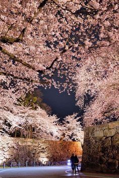 満開の夜 #桜 #CherryBlossom