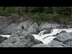 We have some great hiking trails here at Clayoquot Wilderness Resort. Penny Falls, Bedwell Falls, the Goldmine to name a few! www.wildretreat.com