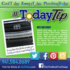 How to get Love bugs off your car. #TodayTip #RemoveLoveBugs #CleanCar #WashCar