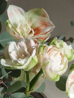 dreamy amaryllis christmas arrangement - flowers for the holidays | MY FRENCH COUNTRY HOME