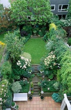 VIEW ONTO TOWN GARDEN WITH LAWN,STEPS AND ROSES 'PENELOPE' AND 'BUFF BEAUTY'. AT THE BACK IS CATALPA BIGNONIOIDES. DESIGNED BY HILARY MCPHERSON