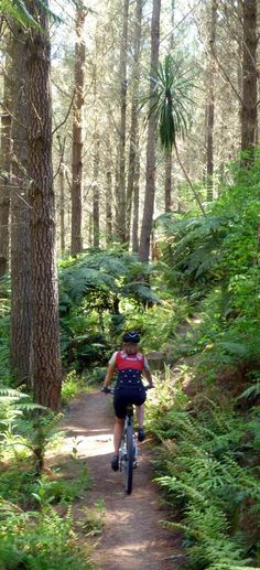 Mountain bike trail among the Redwood Forest, Rotorua - NZ South Pacific, Pacific Ocean, State Of Arizona, Redwood Forest, Best Travel Deals, Mountain Bike Trails, Tourist Information, New Zealand Travel, South Island