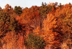 Fall Foliage, New England