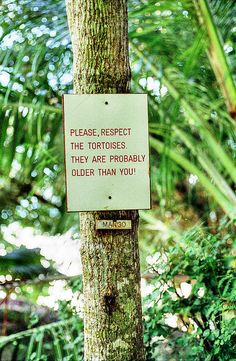 Seychelles, Victoria. Respect the tortoises by Jonathan Palfrey, via Flickr