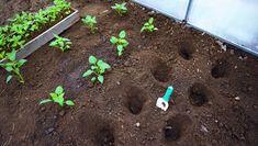 Outdoor Decor, Plants, Plant, Planets