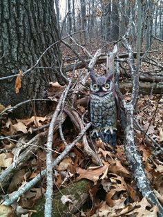 Owl Cache