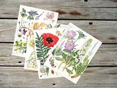 Set of 10 Wildflower Plates illustrations