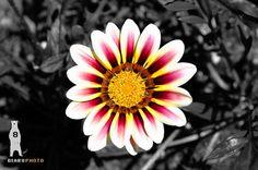 Cheyenne Botanic Gardens, Wyoming, Botanical Photography, Fine Art Print, Purple White Flower, White Flower Art, Yellow Flower, Flower Decor