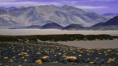 antofagasta volcanes