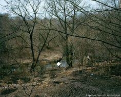 Отдых москвичей на природе