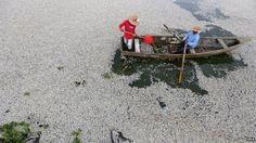 Mexico probes mass fish death in Lake Cajititlan
