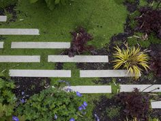 Stepstone's narrow concrete pavers add a graphic touch to the garden.