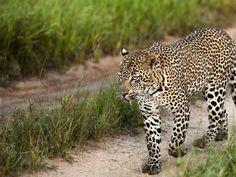 Der Krüger Park gehört zu den tierreichsten Gegenden der Erde